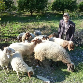Matt Krause - Ahmet Bey tends his sheep near Değirmendere